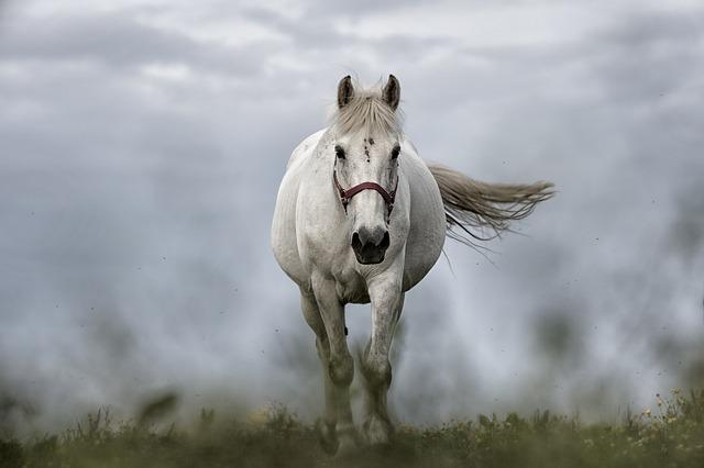 white-horse-1136093_640